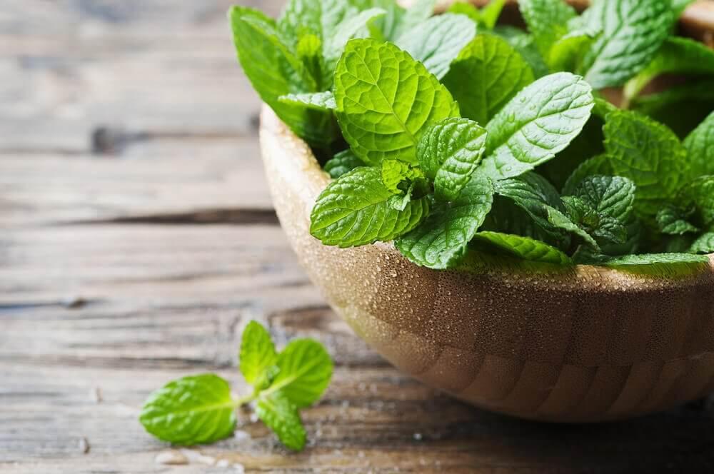 3 remédios com menta para combater a halitose