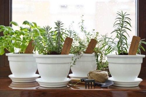 Diferentes plantas de interior