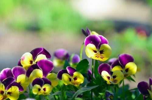 Flores para jardim na varanda