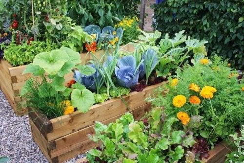 Jardins com flores: ideias surpreendentes