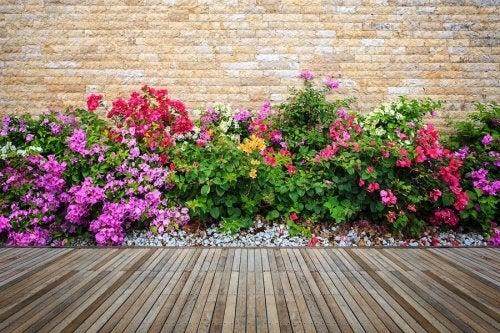 Jardins com flores coloridas