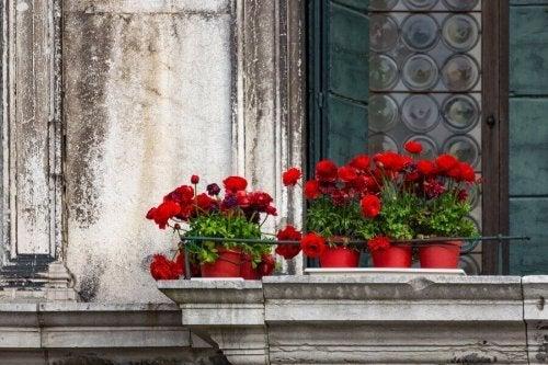 5 tipos de flores para um jardim na varanda