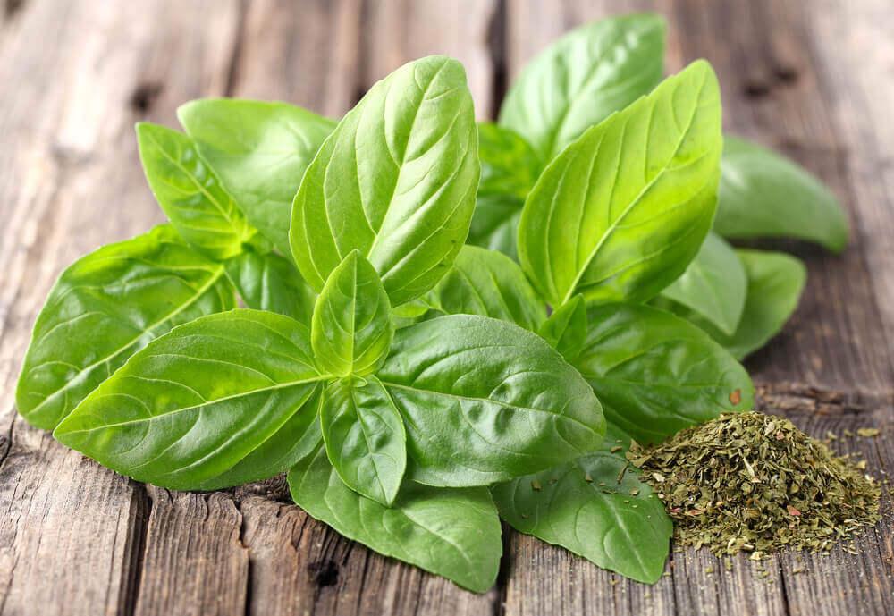 Chá de manjericão para prevenir pedras nos rins.