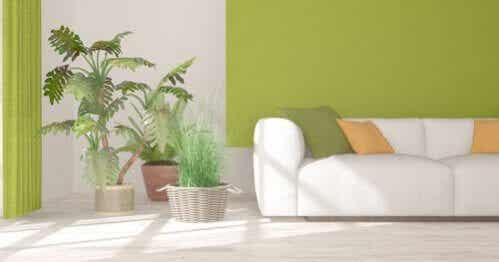 Plantas de interior para decorar seus espaços