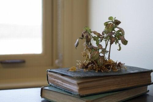 5 maneiras criativas de ter plantas em casa: plantas em móveis e livros