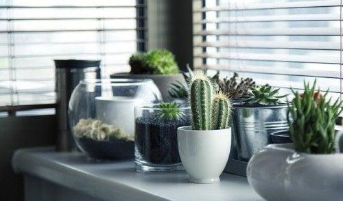 5 maneiras criativas de ter plantas em casa