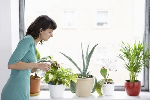 Mulher combatendo as moscas brancasde plantas de interiores