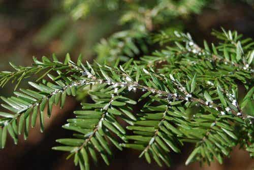 Elimine as moscas brancas das plantas com vinagre
