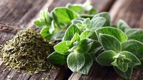 Orégano serve para tratar a tosse seca