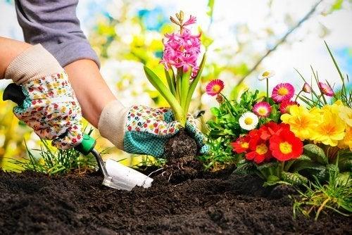 Cuidados especiais das plantas do jardim: adubar