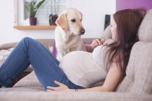 Como coexistir com segurança com cães durante a gravidez