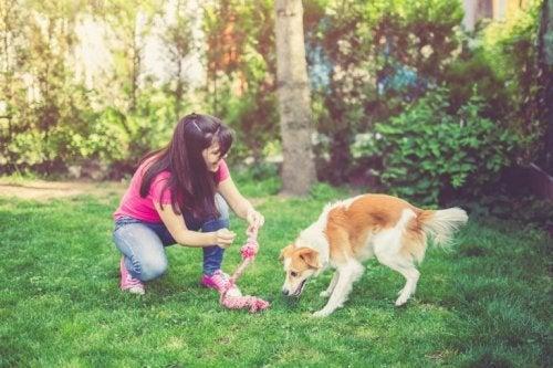 Atividades na natureza: passeio com o cachorro