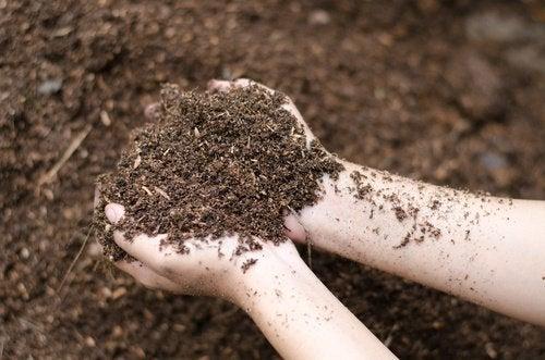 Cuidados especiais das plantas do jardim: colocar terra nova