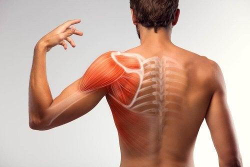 Espasmos musculares: confira as soluções naturais