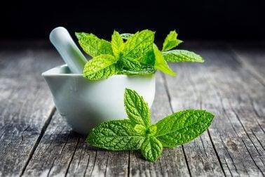Como combater o vômito com remédios naturais: Menta (hortelã)