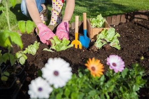 Antes de podar o jardim,cuide da terra