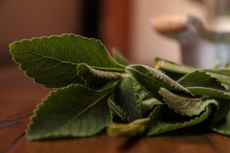 Melhore a saúde do seu fígado com um simples remédio: o boldo