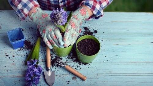 Antes de podar o jardim transplante as flores