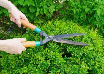 O que ter em mente antes de podar o jardim