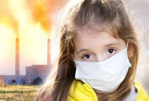 Ter plantas em casa para evitar a poluição do ar