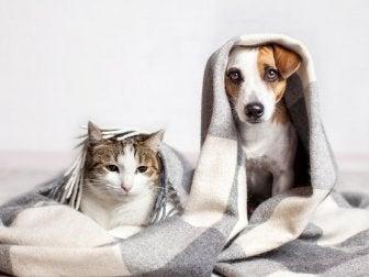Como limpar a casa se tiver animais de estimação