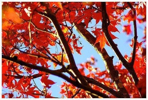 A cor das folhas das árvores é um bom complemento para o casamento em outono