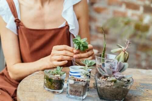 Dicas para criar um mini jardim
