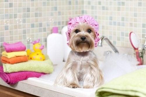 Depois de dar banho no mascote é recomendável limpar a casa