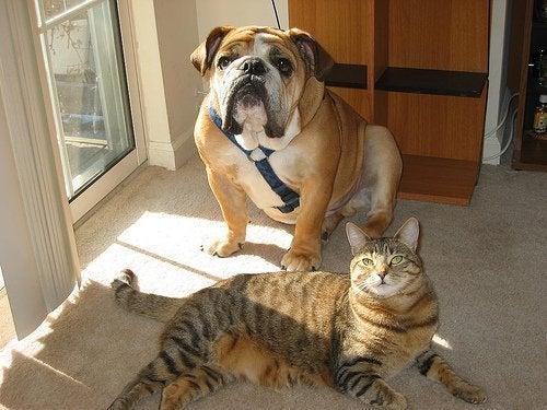 É recomendável limpar a casa depois de deixar entrar os animais