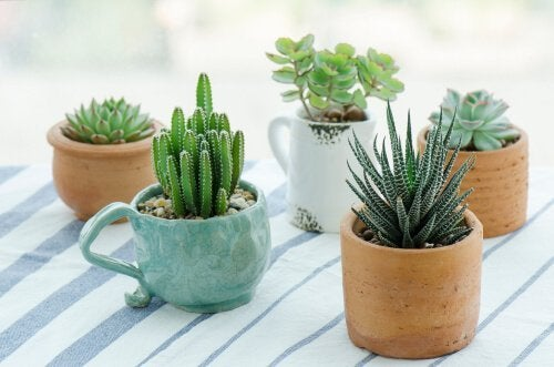 Pode reutilizar utensílios velhos fazendo vasos para plantas
