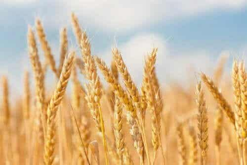 7 cereais integrais que não podem faltar na dieta