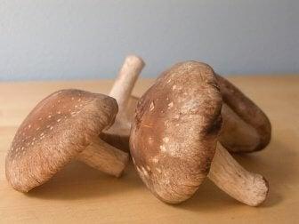 Cogumelos terapêuticos endossados pela ciência: Shiitake