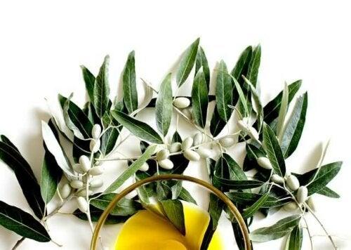 Ervas e plantas para combater a hipertensão