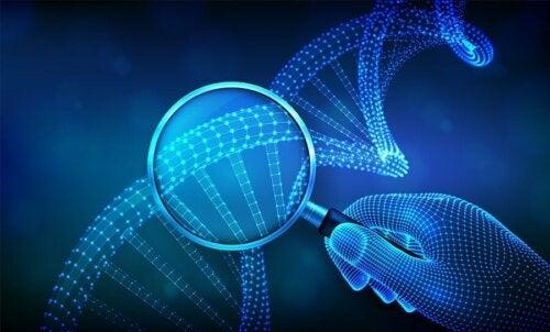 Os gêmeos bivitelinos compartilham apenas 50% de seu DNA