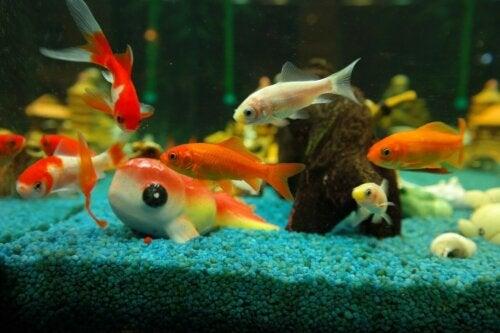 Acessórios para um aquário