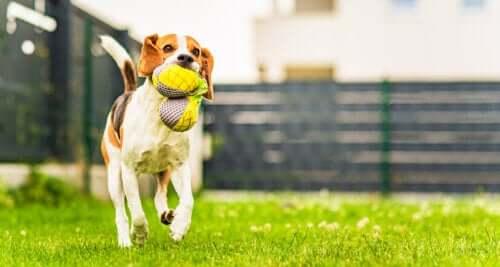 Aprenda a fazer acessórios para seus animais de estimação