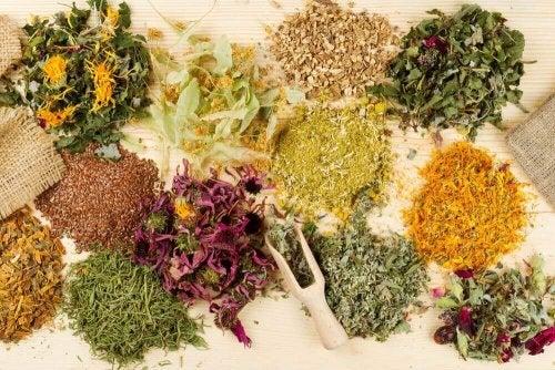 Ervas medicinais para a dor de estômago