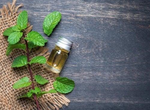 Benefícios do óleo de menta para a saúde corporal