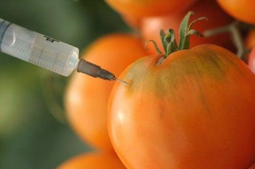 Alimentos transgênicos podem ser cancerígenos