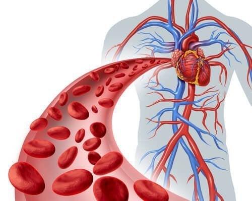 Glóbulos vermelhos pelas veias