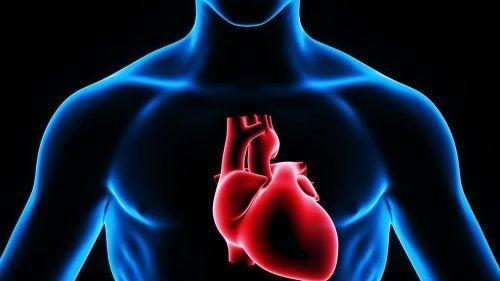 Local da injeção cardíaca