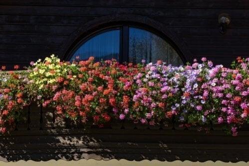 Plantas aromáticas para um jardim pequeno
