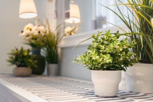 9 dicas para cuidar de plantas de interior