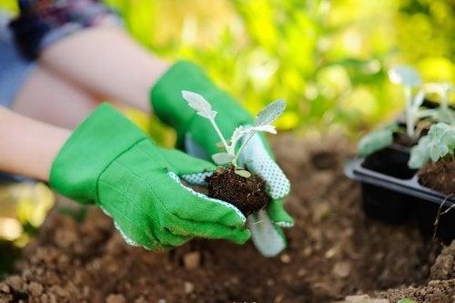Aspectos a levar em conta para transplantar uma planta