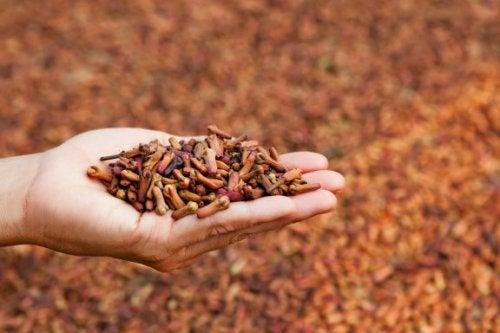 5 usos medicinais do cravo de cheiro