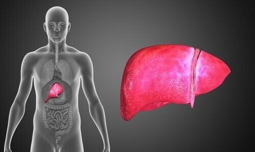 Atresia biliar: sintomas e tratamento