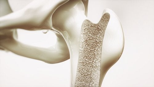 Evitar a osteoporose está entre os benefícios que a aveia brinda