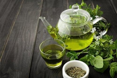 Chá verde é um dos remédios para a circulação