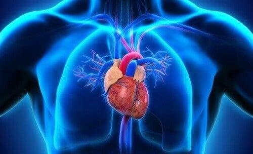 Recriação digital do coração