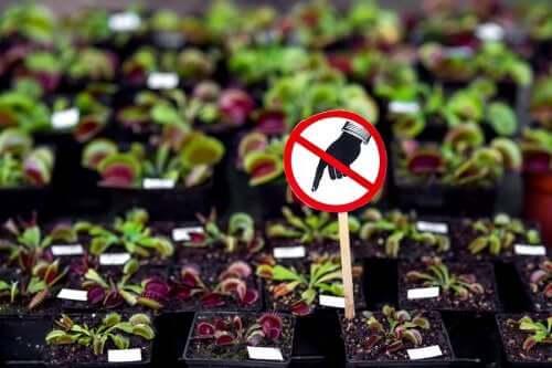 7 plantas perigosas que você não deve ter em casa